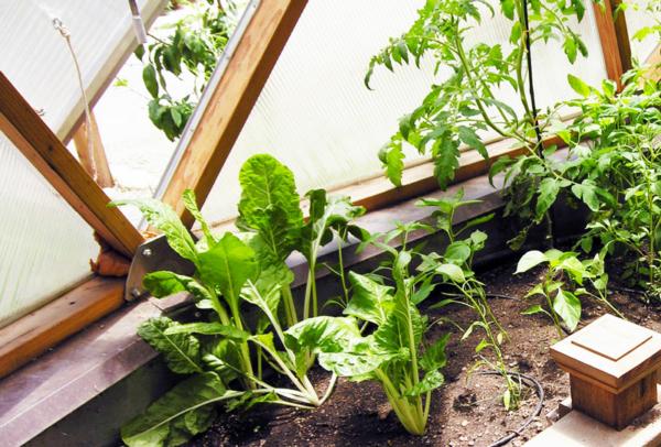 Naropa Greenhouse